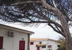 2019 – Condominio Costa del Sole – Portoscuso – Servizio di abbattimento piante all'interno delle aree condominiali