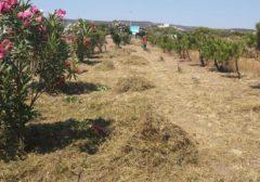 2019 – Comune di Sant'Antioco (SU) – Aumento, manutenzione e valorizzazione del patrimonio boschivo in aree deindustrializzate