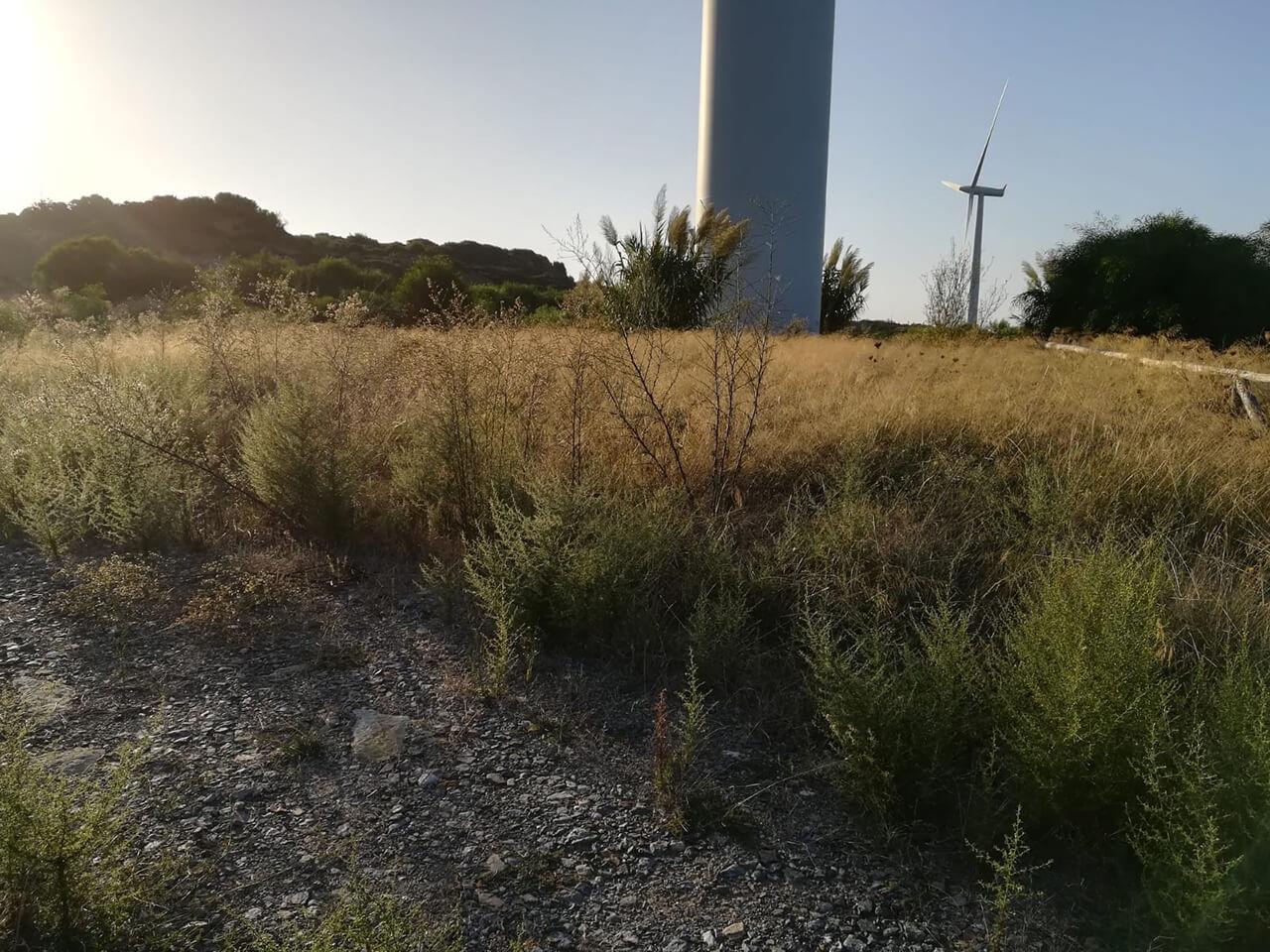 Enel Green Power Spa - Manutenzione aree verdi C.le Eolica Portoscuso e Monte Arci23