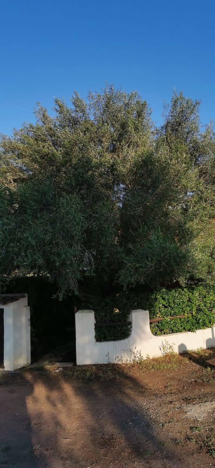 Solemare Case-vacanza Is Potettus - Servizio di giardinaggio1