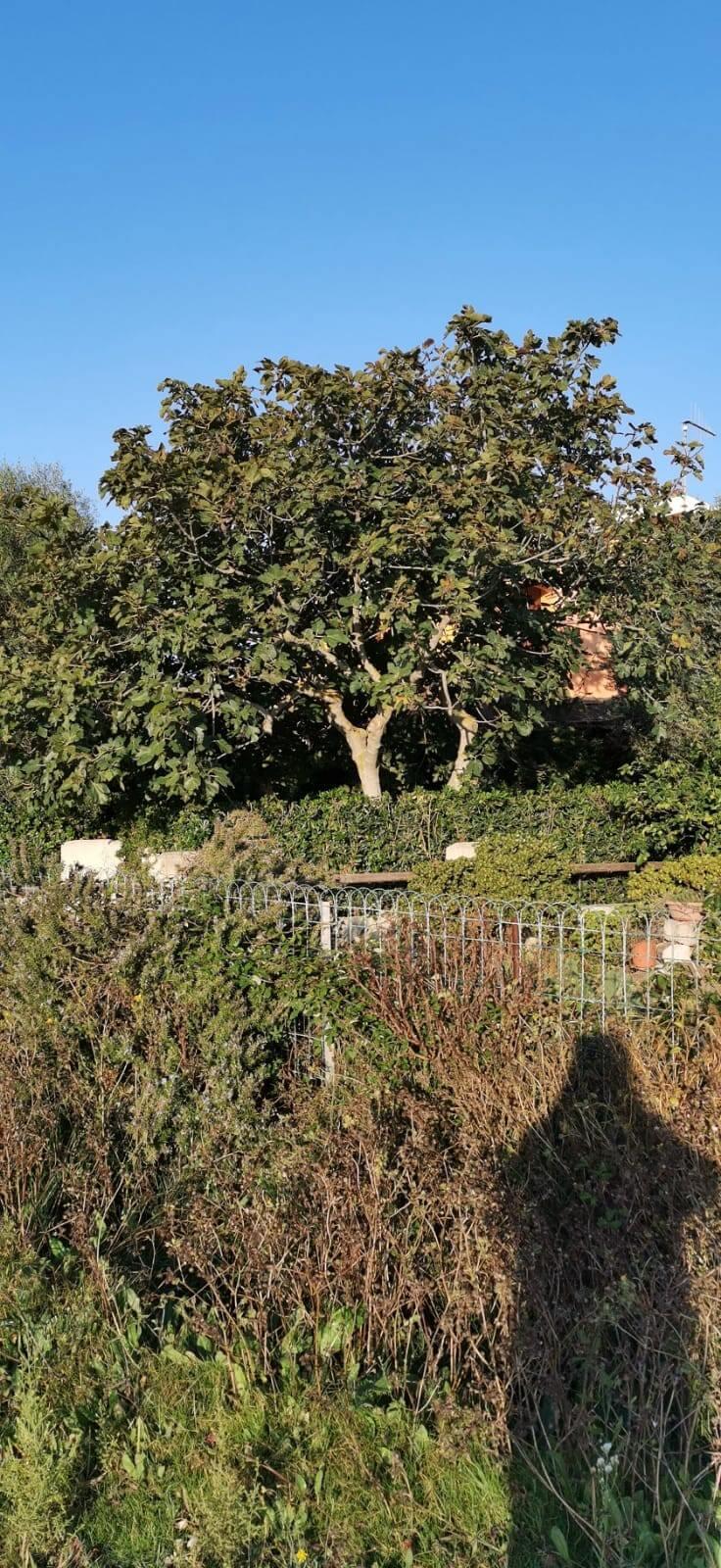 Solemare Case-vacanza Is Potettus - Servizio di giardinaggio2