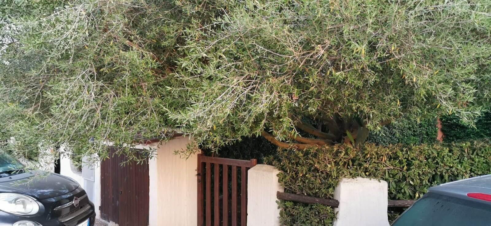 Solemare Case-vacanza Is Potettus - Servizio di giardinaggio9